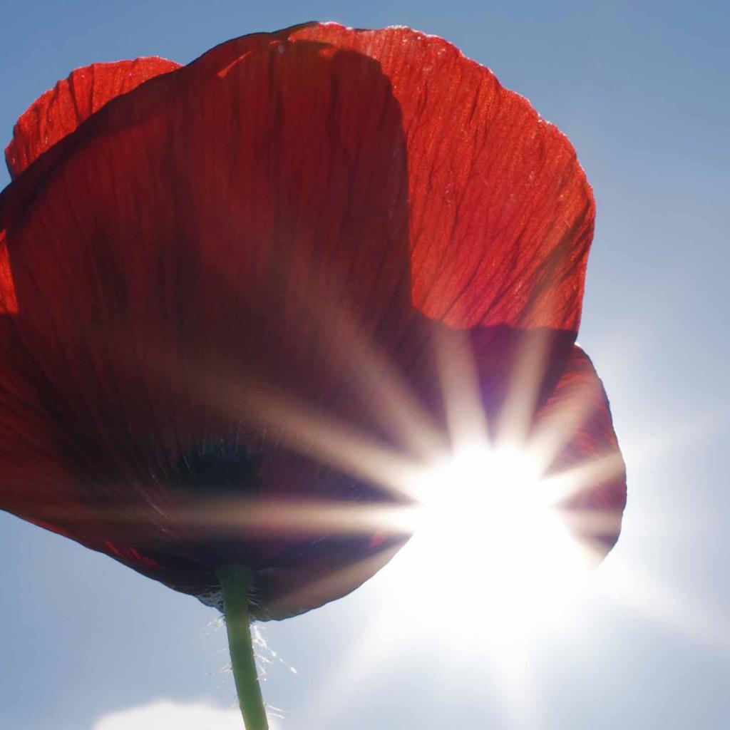 poppy kohinoor uitvaartzorg